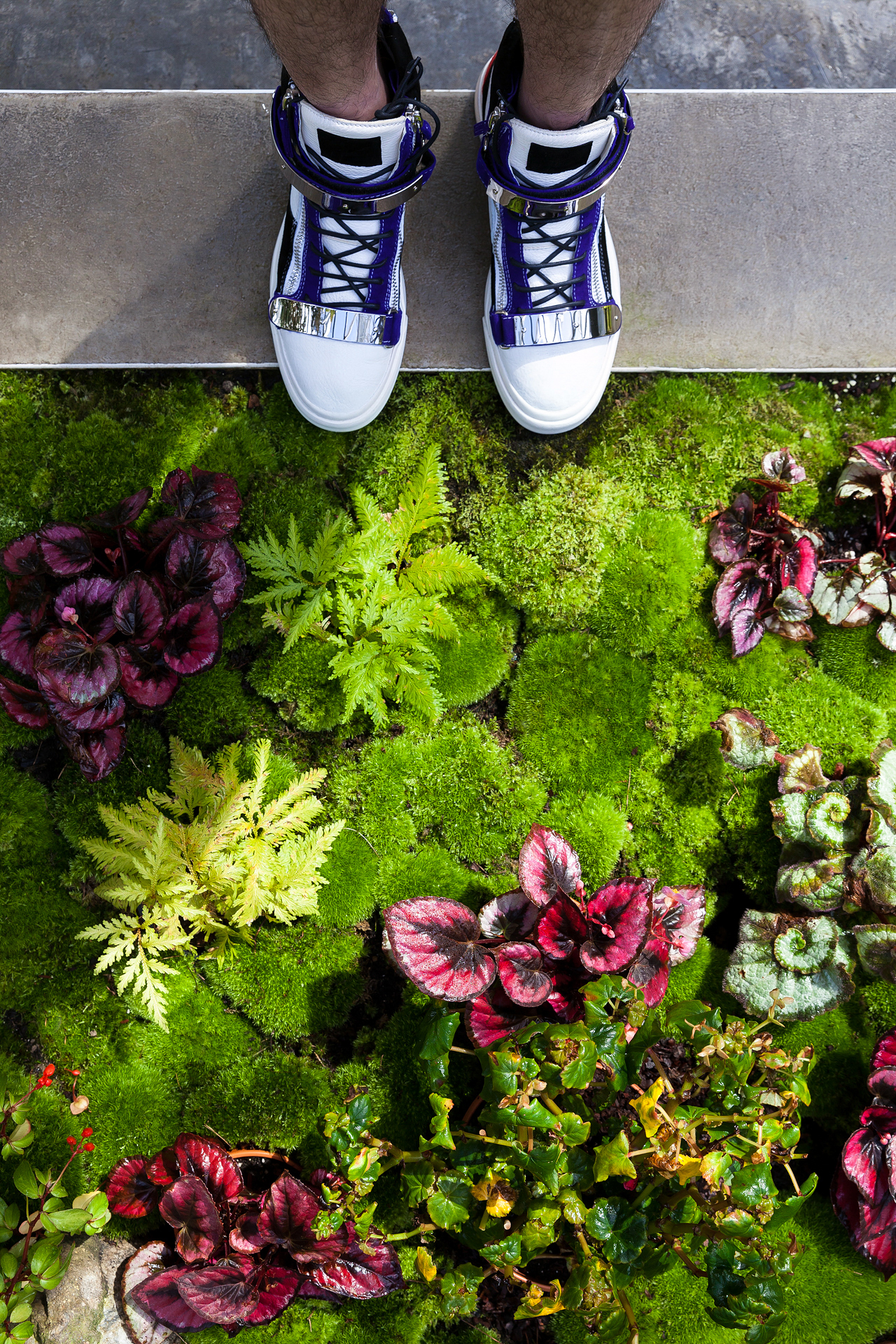 Giuseppe Zanotti White Leather Purple Suede Double Metal Strap Sneakers at Gardens by the Bay Singapore